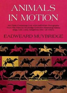 Animals in Motion book cover
